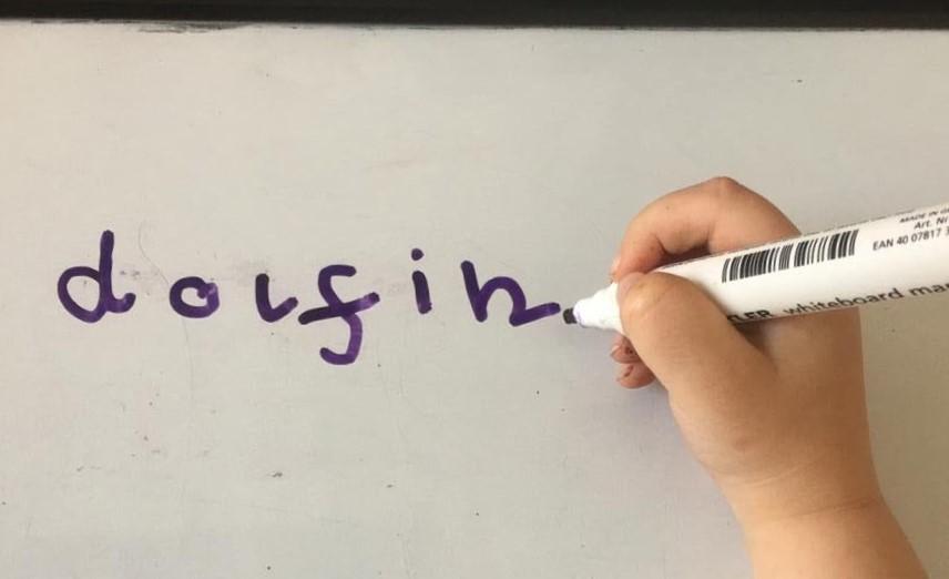 dolfin whiteboard