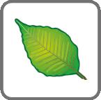 card_leaf